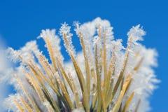 Frozen pine needles Stock Photography