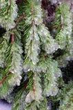 Frozen pine tree Stock Image