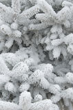 Frozen pine tree Stock Photo