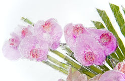 Frozen pink orchid bouquet Royalty Free Stock Photography