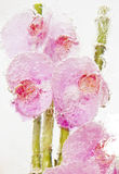 Frozen pink orchids vertical Stock Image