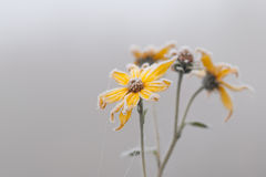 Frozen plant Royalty Free Stock Photography