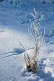 Frozen plant Stock Photo
