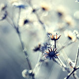 Frozen plant Stock Image