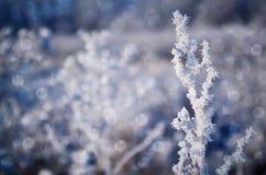 Frozen plant. Royalty Free Stock Photos