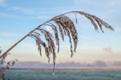 Frozen plant. In beautiful landscape royalty free stock photos