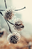 Frozen plant covered with hoarfrost Stock Images
