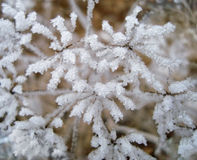 Frozen plant covered in snow and ice in heart shape Royalty Free Stock Photo