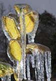 Frozen plant Stock Photo