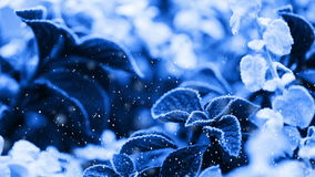Frozen plant (looping) stock video footage