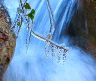 Frozen plant near waterfall Royalty Free Stock Photo