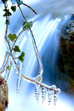 Frozen plant near waterfall Stock Image