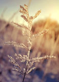 Frozen plant at sunrise stock photography