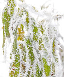 Frozen plant Stock Photos