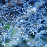 Frozen plant Stock Photography
