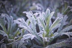 Frozen Stock Photo