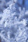 Frozen plants stock image