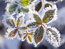 Frozen plants Stock Image