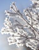 Frozen plants royalty free stock image