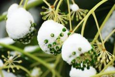 Frozen Plants. Winter background Stock Photos