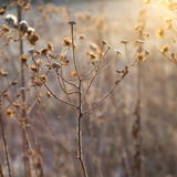 Frozen plants against the light in wintertime Royalty Free Stock Photos