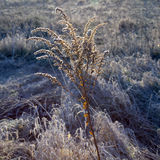 Frozen plants against the light in wintertime Royalty Free Stock Images
