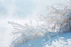 Frozen plants. A beautiful cold morning on January near the Olt river Royalty Free Stock Image