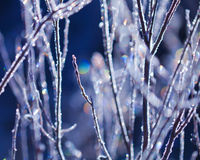 Frozen plants Royalty Free Stock Photography