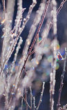 Frozen plants Stock Photography