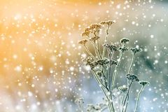 Frozen plants in early morning close up in winter royalty free stock images