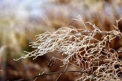 Frozen plants Stock Photo