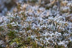 Frozen plants Royalty Free Stock Photo