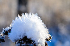 Frozen plants grown with ice crystals Stock Images