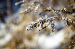 Frozen plants grown with ice crystals Stock Photos