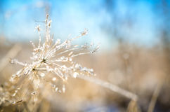 Frozen plants grown with ice crystals Royalty Free Stock Photo