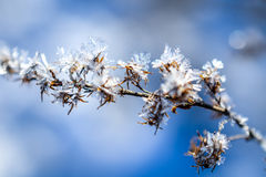 Frozen plants grown with ice crystals Stock Image