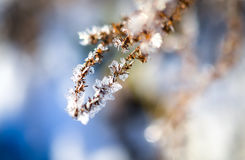 Frozen plants grown with ice crystals Stock Photo