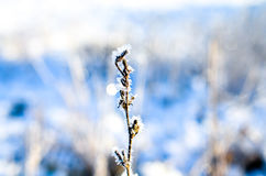 Frozen plants grown with ice crystals Royalty Free Stock Photos