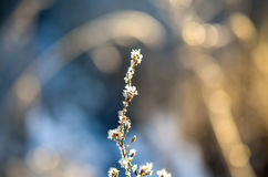Frozen plants grown with ice crystals Royalty Free Stock Images