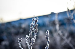Frozen plants grown with ice crystals Royalty Free Stock Photography