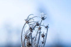 Frozen plants grown with ice crystals Royalty Free Stock Image