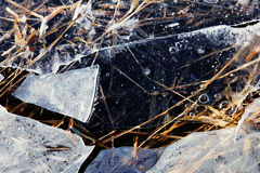 Frozen plants in ice on the coast of the river. In Latvia Royalty Free Stock Photos