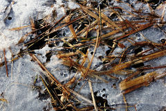 Frozen plants in ice on the coast of the river Royalty Free Stock Images