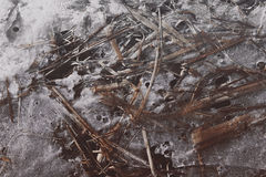 Frozen plants in ice on the coast of the river. In Latvia Royalty Free Stock Photography