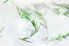 Frozen plants inside piece of ice - glacial rosemary pattern. Frozen plants inside piece of ice. Icy herb texture. Glacial rosemary pattern Royalty Free Stock Photography