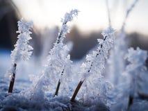 Frozen plants Stock Photos