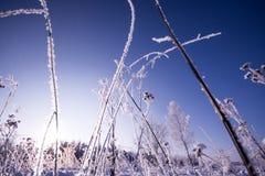 Frozen plants landscape, close up Stock Photo