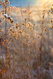 Frozen plants in meadow Royalty Free Stock Photos