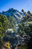 Frozen plants in the mountain at sunrise Royalty Free Stock Photo