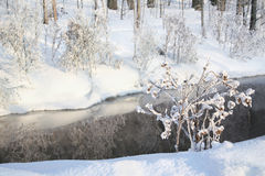 Frozen plants by river Royalty Free Stock Images